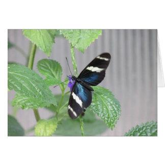 Mariposa azul, blanco y negro tarjeta pequeña