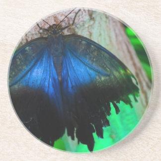 Mariposa azul común posavasos
