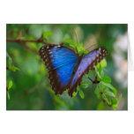 Mariposa azul de Morpho Felicitacion