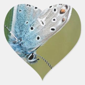 Mariposa azul en la planta pegatina en forma de corazón