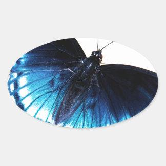 Mariposa azul hermosa pegatina ovalada