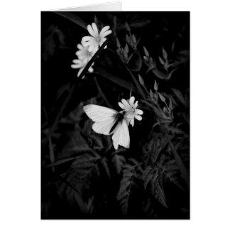 Mariposa blanca de madera tarjeta de felicitación