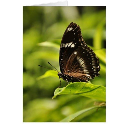 Mariposa blanca negra en tarjetas de felicitación
