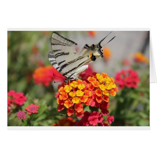 Mariposa blanca y negra de la cebra tarjetas