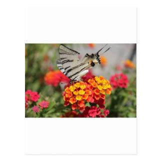 Mariposa blanca y negra de la cebra tarjetas postales