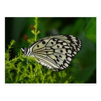 Mariposa blanca y negra de las alas postal