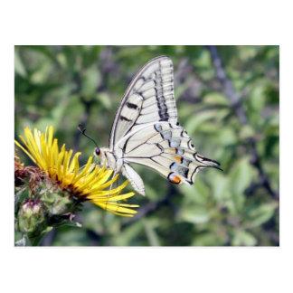 Mariposa blanca y negra en la flor amarilla postales
