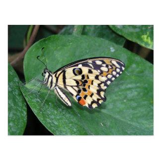 Mariposa blanco y negro amarilla en la hoja