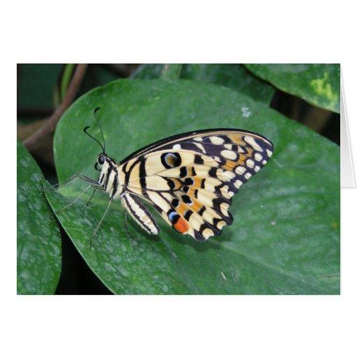 Mariposa blanco y negro amarilla en la hoja tarjeta