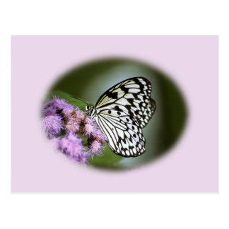 Mariposa blanco y negro de la ninfa postal