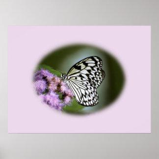 Mariposa blanco y negro de la ninfa póster