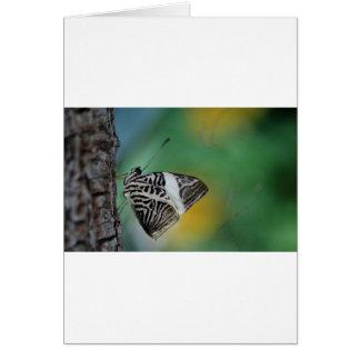 Mariposa blanco y negro del tigre felicitación