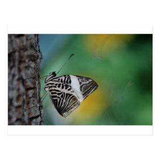 Mariposa blanco y negro del tigre tarjeta postal