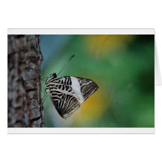 Mariposa blanco y negro del tigre tarjetón