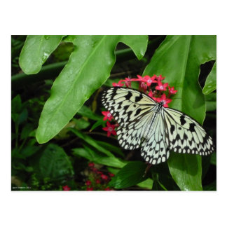 Mariposa blanco y negro en abril Robbins Postal