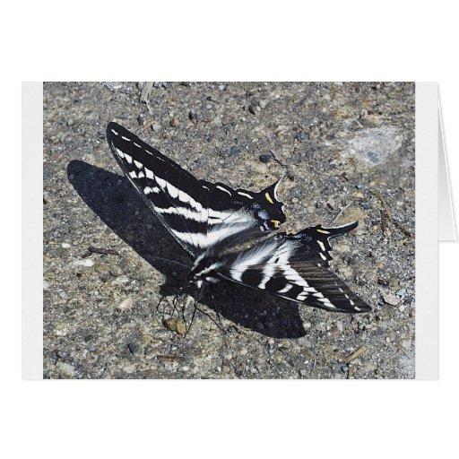 Mariposa blanco y negro en el hormigón felicitación