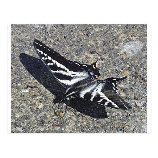 Mariposa blanco y negro en el hormigón tarjeta postal