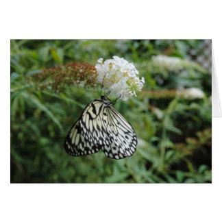 Mariposa blanco y negro en la flor tarjeta de felicitación