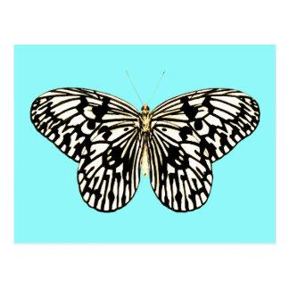 Mariposa blanco y negro, fondo de la turquesa postal