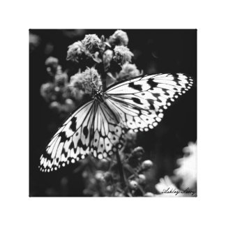 Mariposa blanco y negro lienzo