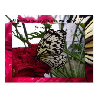 Mariposa blanco y negro postal