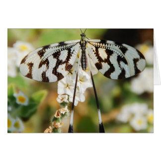 Mariposa blanco y negro tarjeton