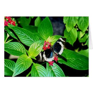 Mariposa blanco y negro tarjetas