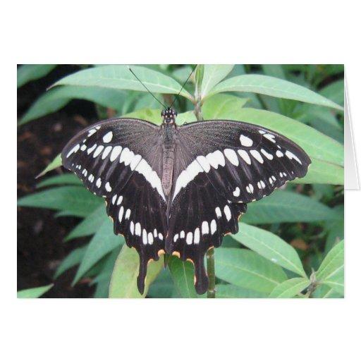 Mariposa blanco y negro tarjeta