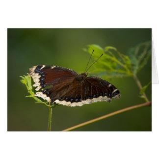 Mariposa blanco y negro felicitación
