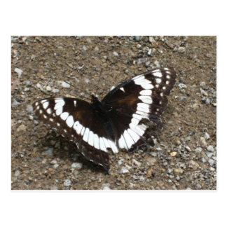 mariposa blanco y negro tarjeta postal