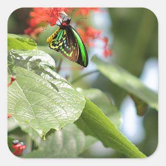 Mariposa colorida pegatina cuadrada