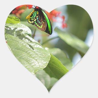 Mariposa colorida pegatina en forma de corazón