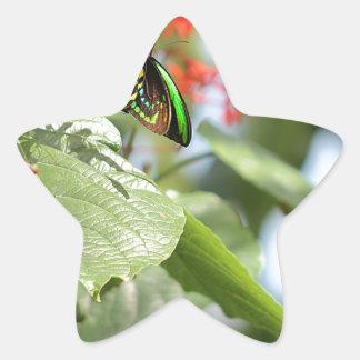 Mariposa colorida pegatina en forma de estrella