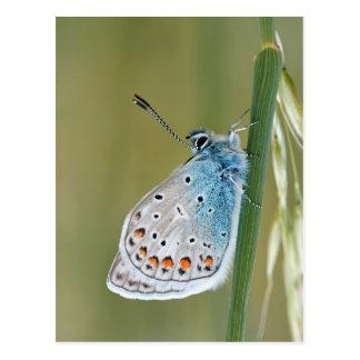 Mariposa colorida postal