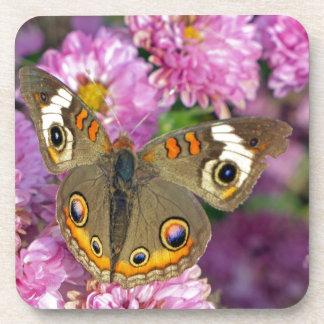 Mariposa común del castaño de Indias Posavasos