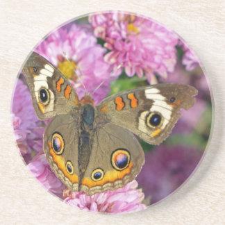 Mariposa común del castaño de Indias Posavasos De Arenisca