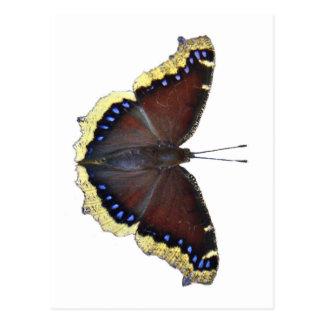 Mariposa de capa de luto - antiopa del Nymphalis Postal