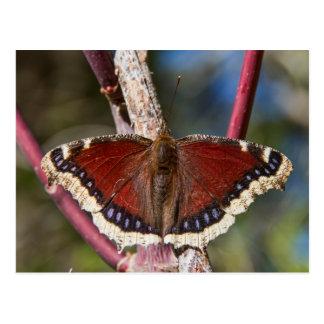 Mariposa de capa de luto postal