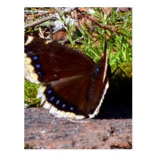 Mariposa de capa de luto Upclose Postal