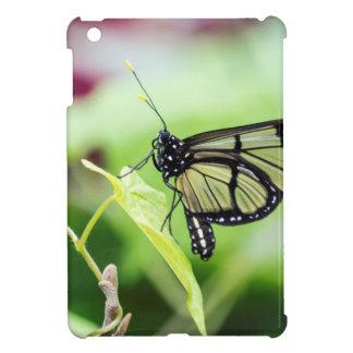 Mariposa de cristal del ala