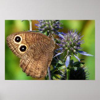 Mariposa de la ninfa de madera póster