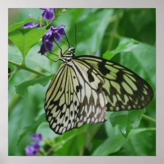 Mariposa de la ninfa del árbol poster