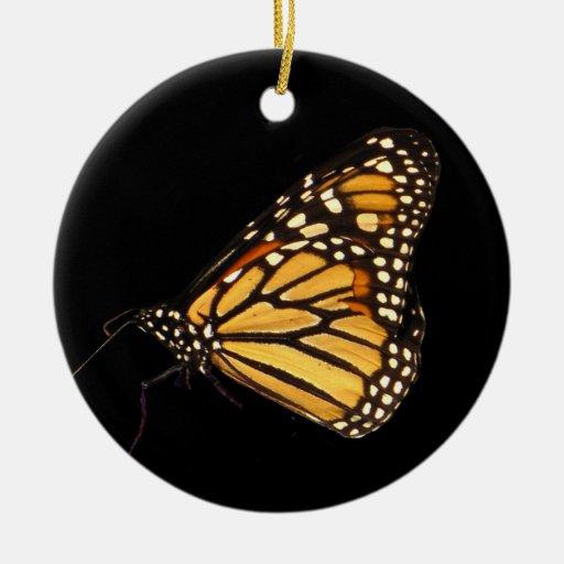 Mariposa de monarca ornatos