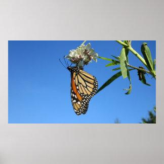 Mariposa de monarca contra el cielo azul - póster