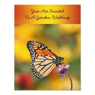 Mariposa de monarca en busca del polen comunicado
