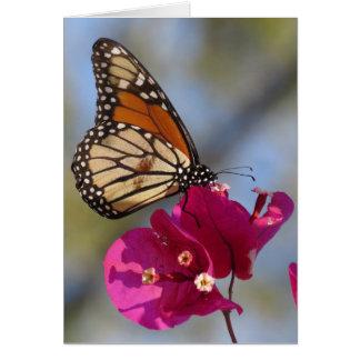 Mariposa de monarca en el flor del bougainvillea tarjeta