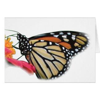 Mariposa de monarca en imagen de la flor felicitacion