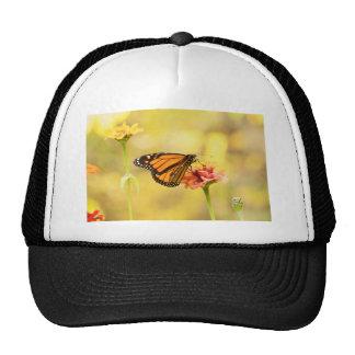 Mariposa de monarca en Zinnia Gorros