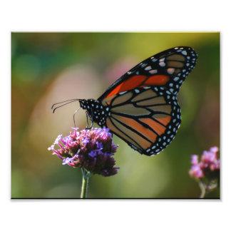 Mariposa de monarca foto