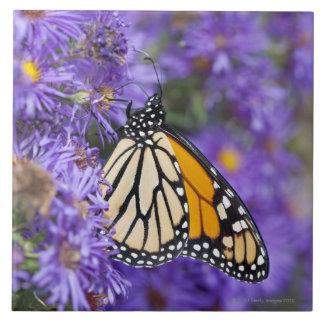 Mariposa de monarca que alimenta en las flores del tejas